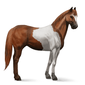 cheval de selle paint horse pie tobiano alezan