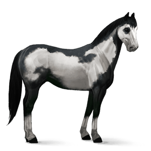 cheval de selle paint horse pie overo noir
