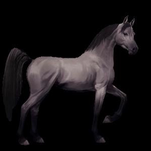 cheval de selle arabe isabelle