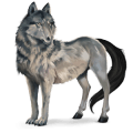 cheval sauvage loup
