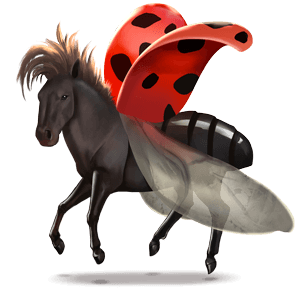 cheval sauvage coccinelle